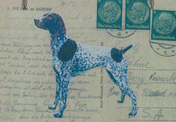 German Shorthaired Pointer Liver Amp White Magnetic Note Board